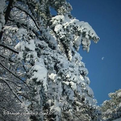 Georgia Snowy Pines