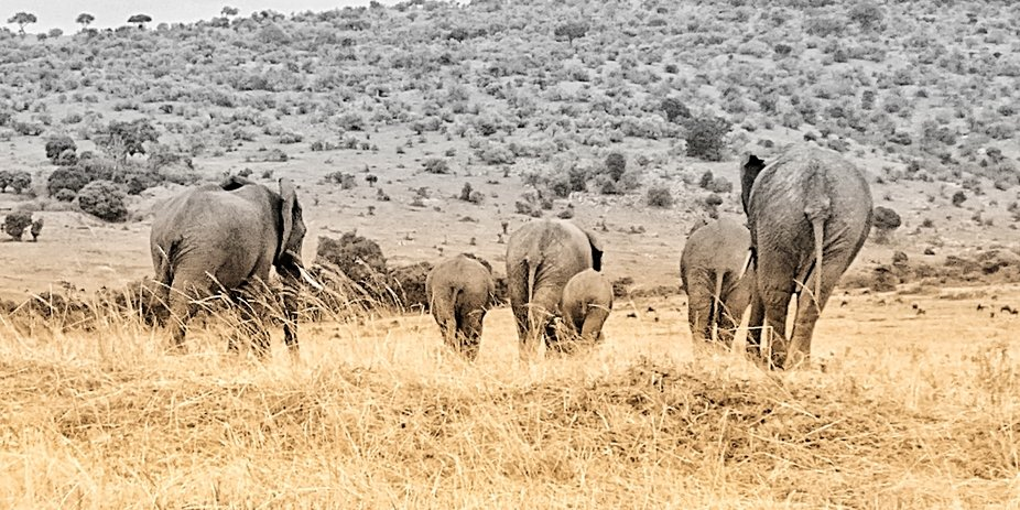 Currently on safari in Kenya so unable to post much....but spotted this family on our way into th...