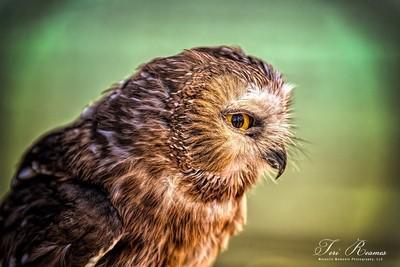 The Eye Of An Owl . . .