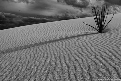 White Sands B&W