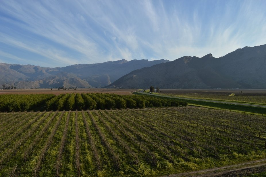 Fruit trees and vineyards in Rawsonville, Western Cape, South Africa