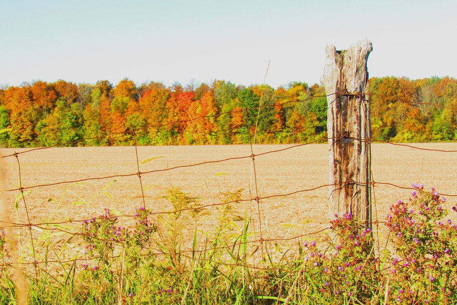 Taken from roadside on a day when the trees were so colourful and bright!