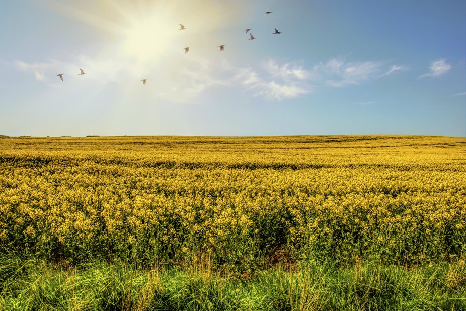 Taken near the eastern Scotland/England border with a Nikon D750.