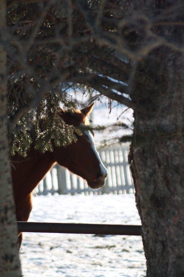 Horses sneaking  around.