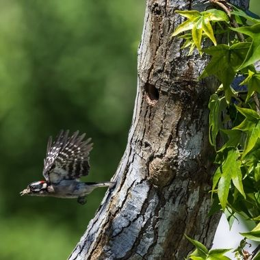 flying out of the nest