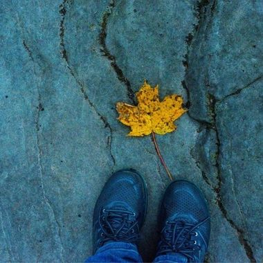 fallen maple leaf in autumn NY