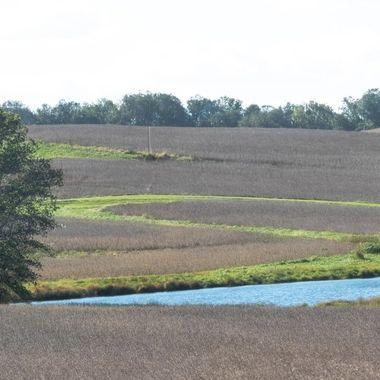Soy fields in early Fall