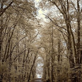 Drizzly overcast walk at Gardeners Park.  I like how this came out, considering there was no sun.  Nikon D70 / 590 nm IR  #infrared  #infrared_im...