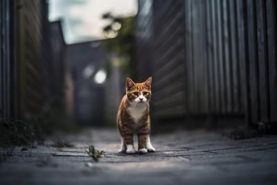 Ginger Kitten in Alley