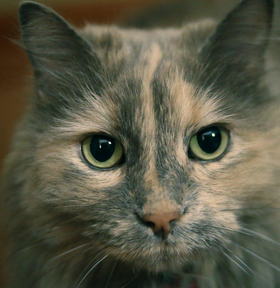Sabrina A.K.A. Fluffy Cat