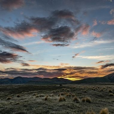 Tussock sunrise