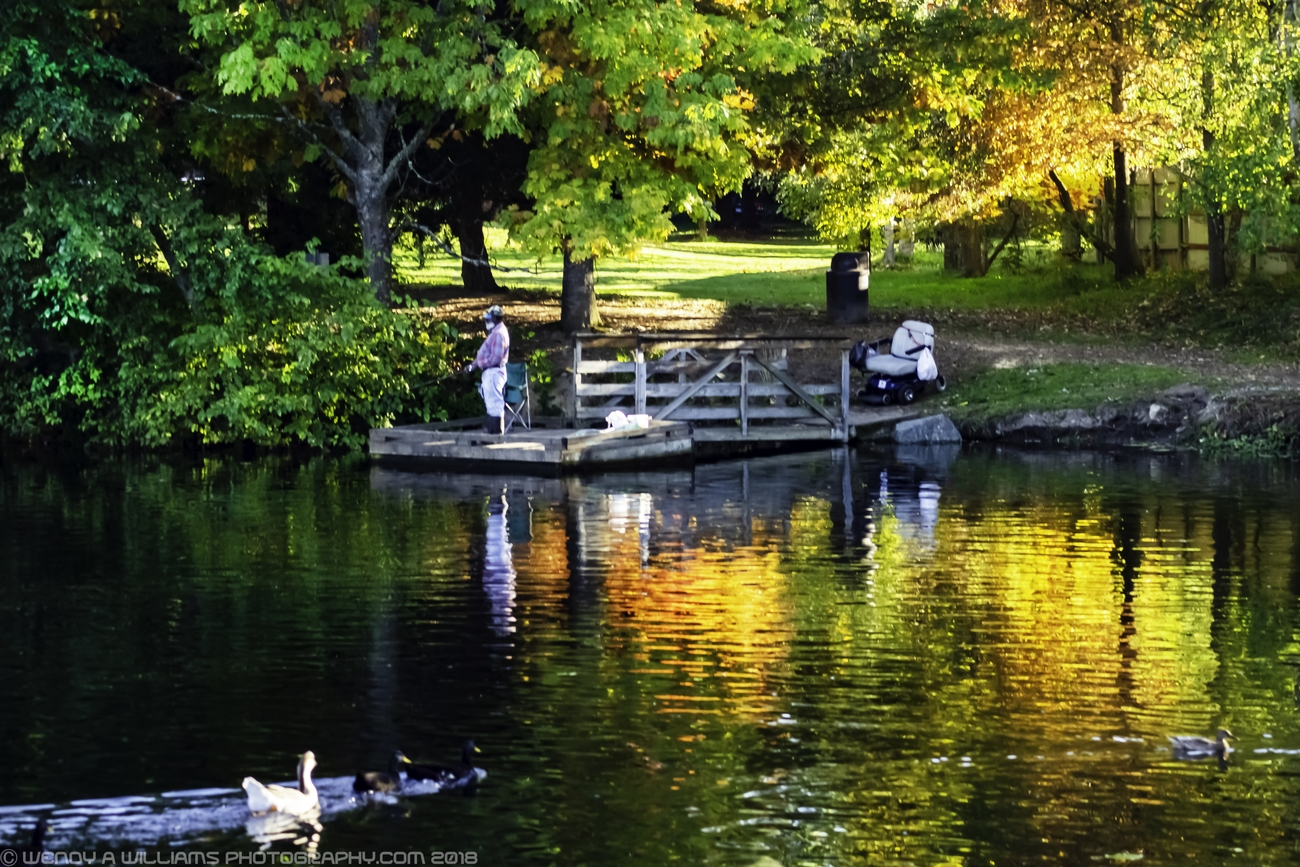 While catching the fall reflections in the duck pond a man came out to fish. The ducks came to watch the man fishing.