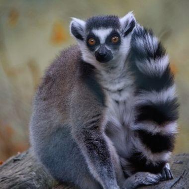 Zoo Maia Portugal