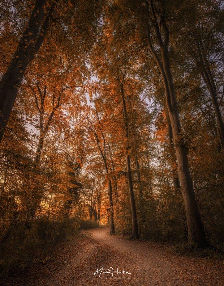 Autumn forest by Markus_van_Hauten - Tall Trees Photo Contest