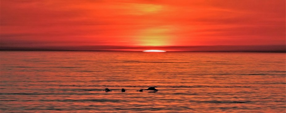 Dawn on Lake Ontario with a lonely mallard and sunrise breaking the surface.