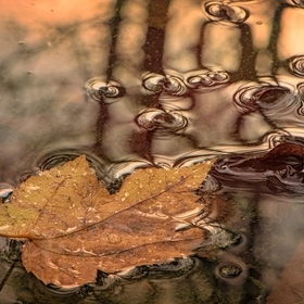 Captured this image at my cabin on our very wet little piece of mountain. Found this leaf waning in the puddle as the trees appear to watch.