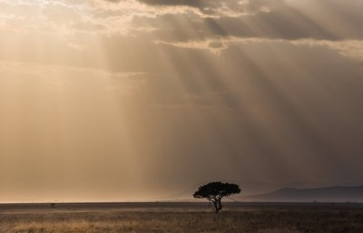 Evening in the Savana