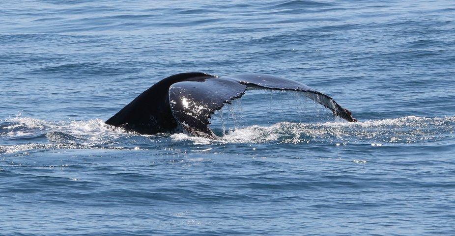 #Forster #lovethegreatlakes #AmarooCruises #whalewatching @Amaroo Cruises