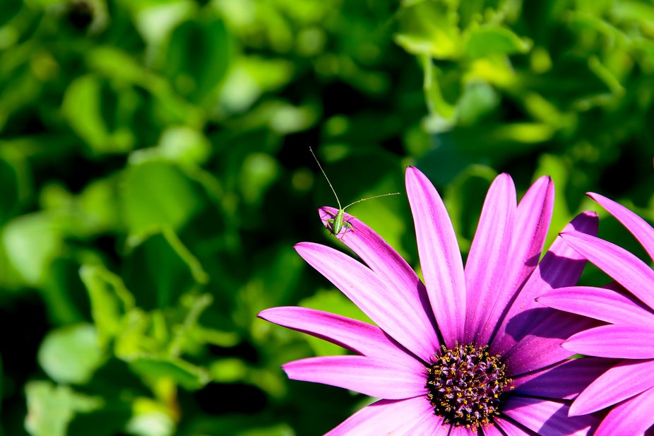 I took this shot while taking photos of the flowers in my back yard.