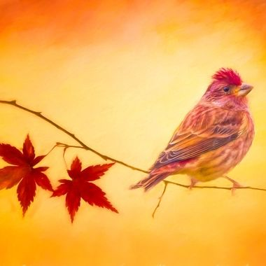 Purple Finch at Sunrise