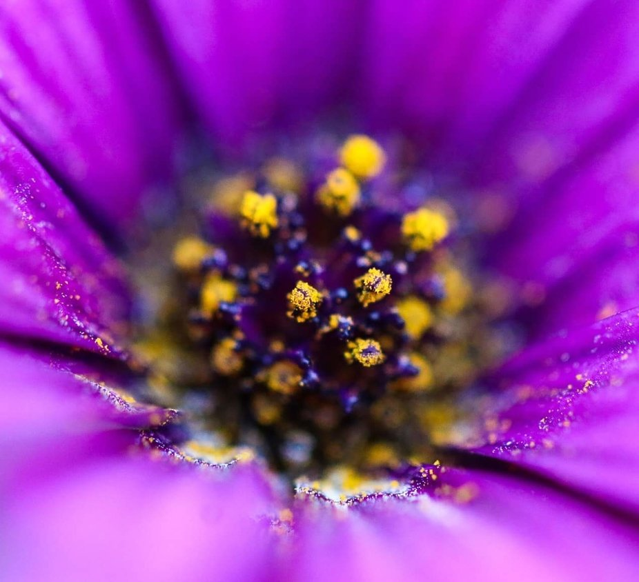 Purple flower with bright yellow pollen what else