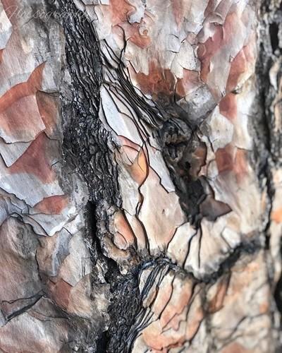 Layers #bark #treebark #treebarklovers #treebarktexture #cobbncomuseum #Hey_ihadtosnapthat #australiagram #focusaustralia #australia_shotz #ig_down_under #ig_creativephotography #instalike #ig_aussiepix #1more_australia #australiacolors #creativegrams #qu