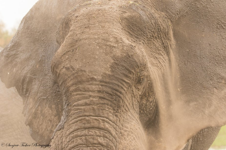 A full frame covering the face , during the dust bath by giant Tusker.
