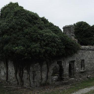 Derelict cottage in the west of iRELAND