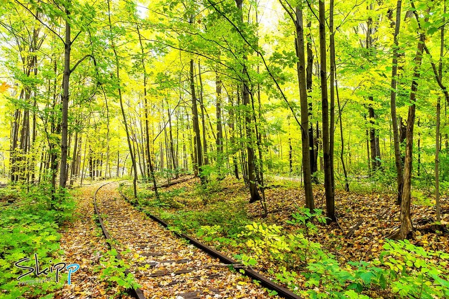 Taken at a beautiful park in Milton, Ontario Canada.  Discovered when a client brought me here fo...