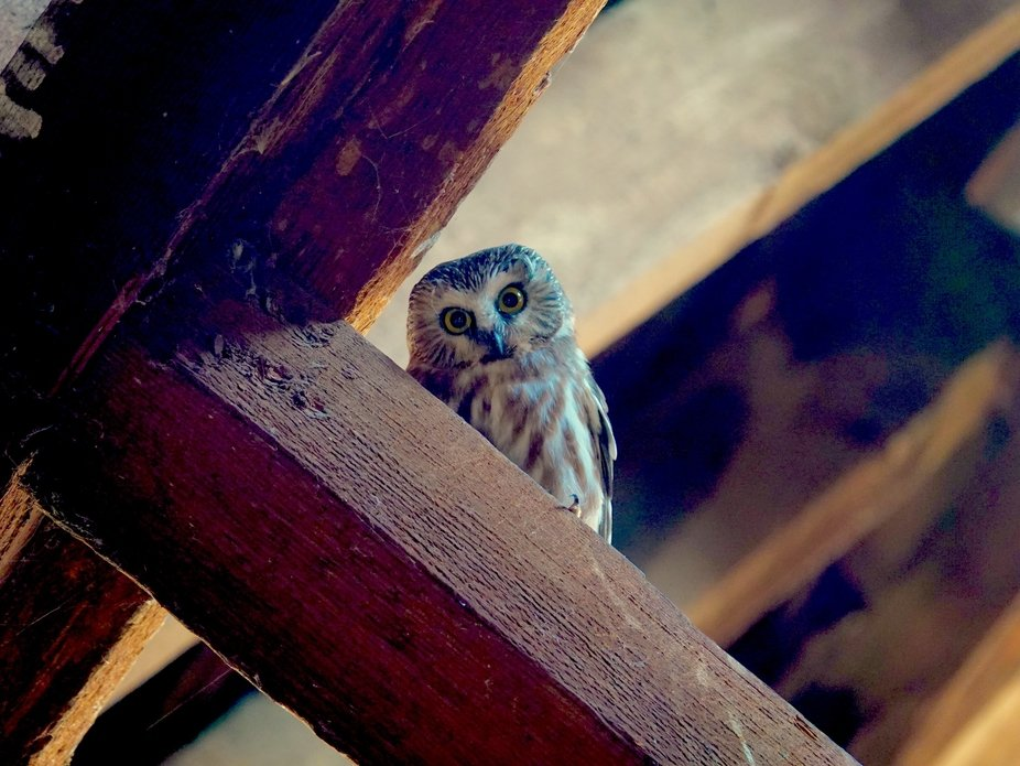 Story is I found an owl, cute very tiny