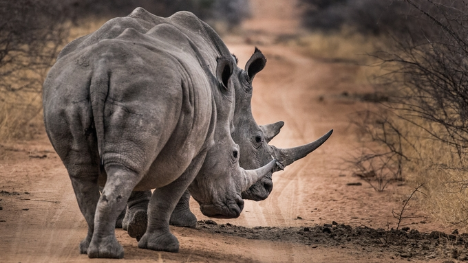 2 of a kind  by christophergrobler - Celebrating Earth Day Photo Contest 2019