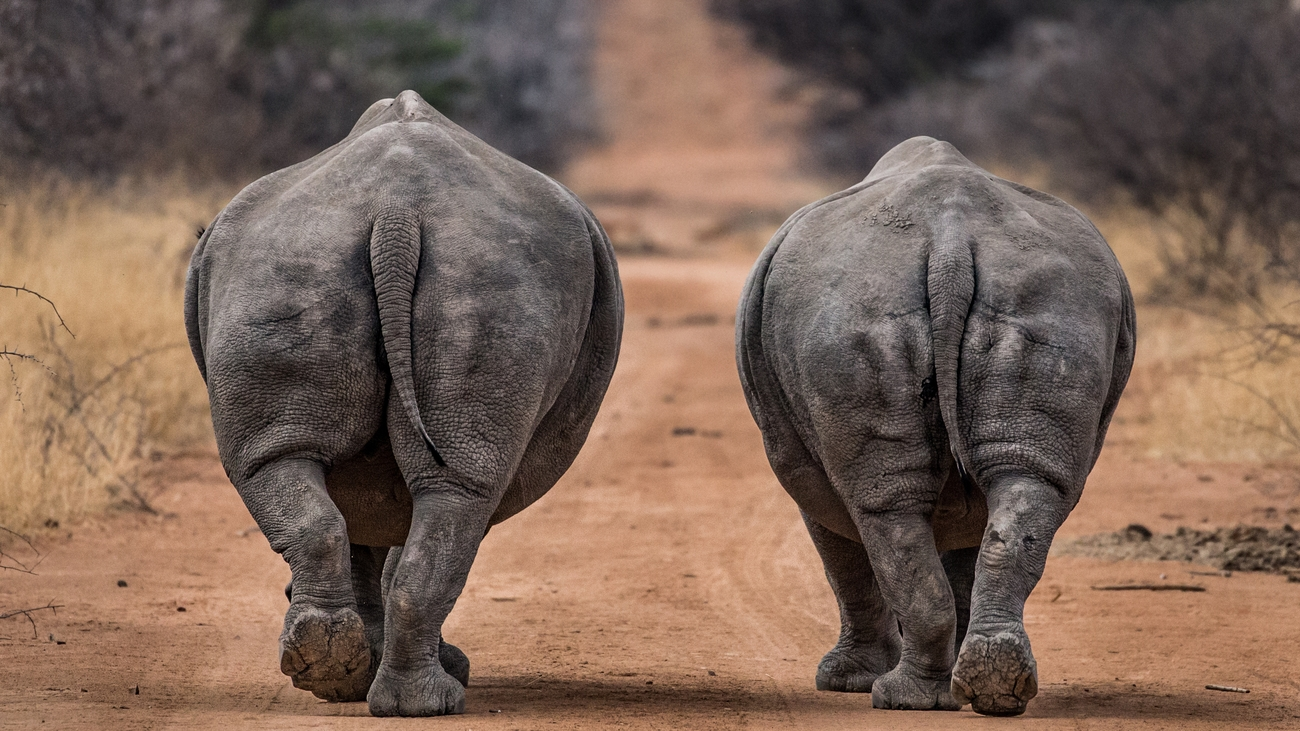 18+ Captivating Photos Of Endangered Species That We Hope Will Help Raise Awareness