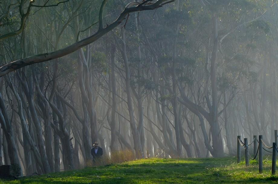 Eucalyptus forest by Rodiles beach, Asturias.