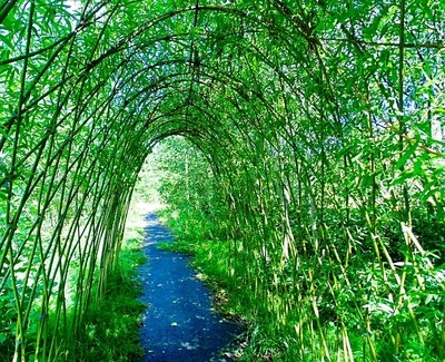 Beautiful Willow Arch.