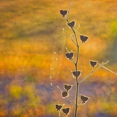 Weed n Web