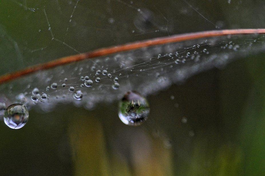 Raindrop Web