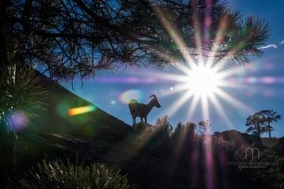 Bighorn sun flare