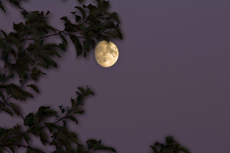 Leaves & Moon