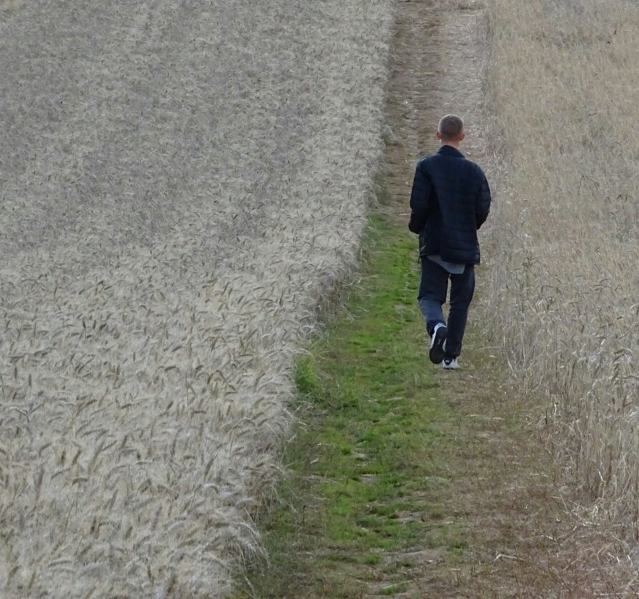 Young man walking through a field of barley