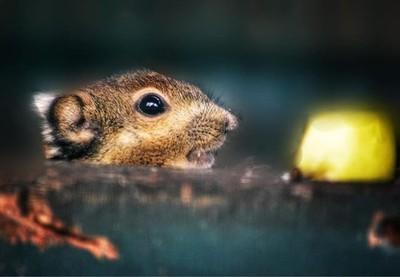 Oh hey ???????? I love this little guy @thrigbywildlife  #tamiopssquirrel #asiaticstripedsquirrel #squirrel #squirrelsofinstagram #squirrels #smallanimals #rodent #rodentsofinstagram #zoophotography #cuteanimals #nikon_photography_ #nikon #mynikonlife #ia