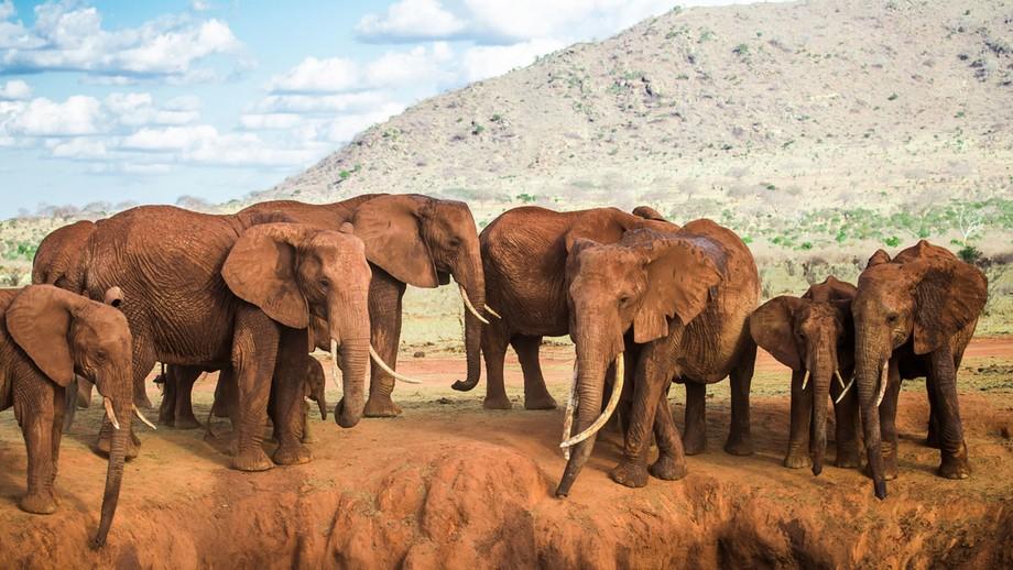 Taken in Voi , Kenya. Fantastic day with fantastic animals!