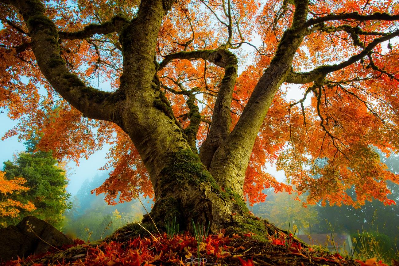 The Tree Lover Photo Contest Winner