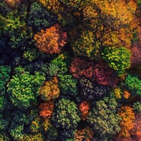 A forest from above in Autumn