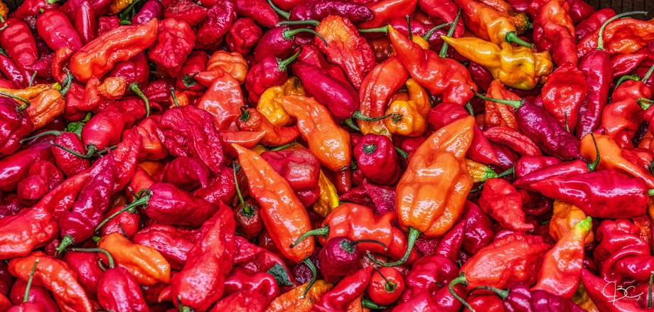 Boxes of peppers at our local farmer's market glow with redness