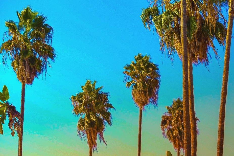 Summer in Cali