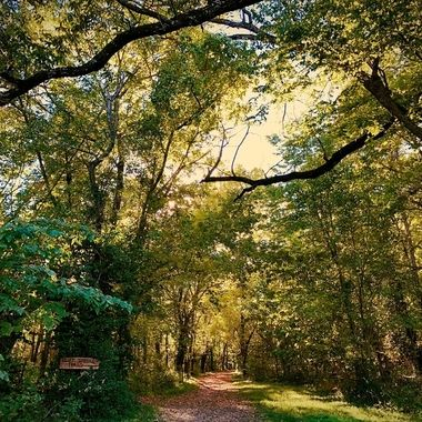 Ozark Trail in Autumn