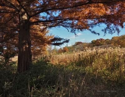 Autumn in the Prairie State
