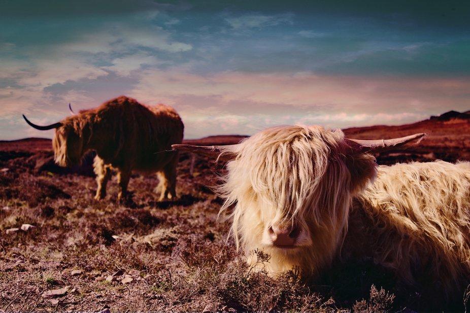 Roadtrip through Scotland's moutamoun. Stunning!