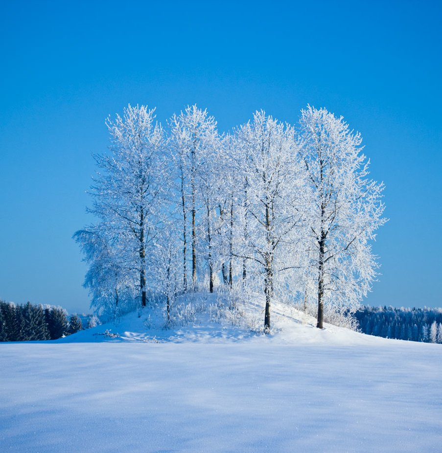 by RuneSaether - Tall Trees Photo Contest