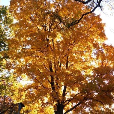 Fall Morning Glow
